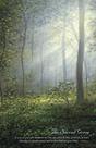 Sacredgrove